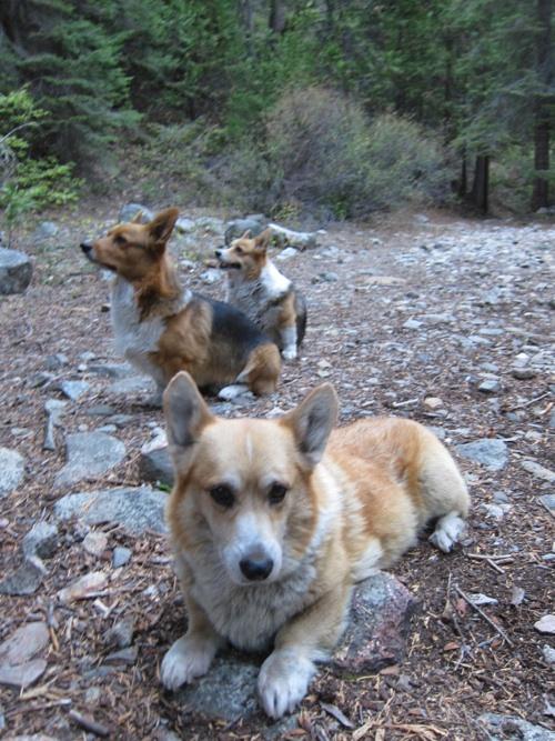 pets and camping