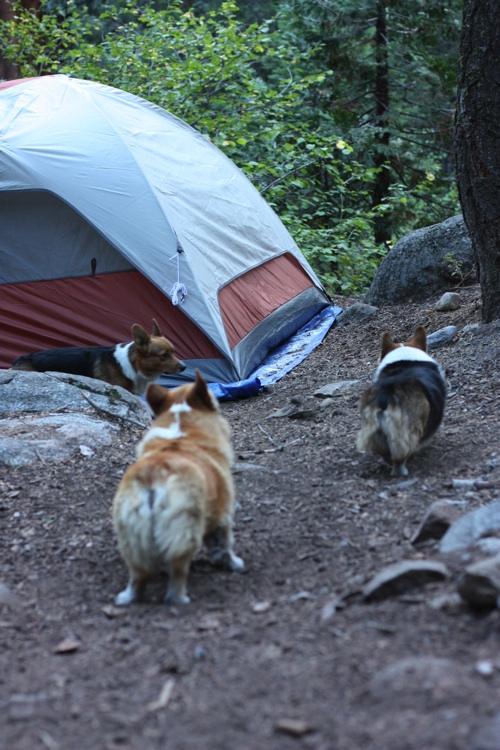 REI Kingdom 6-man Tent