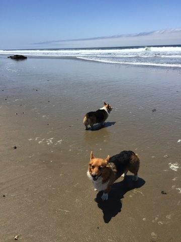 Jalama Beach CA