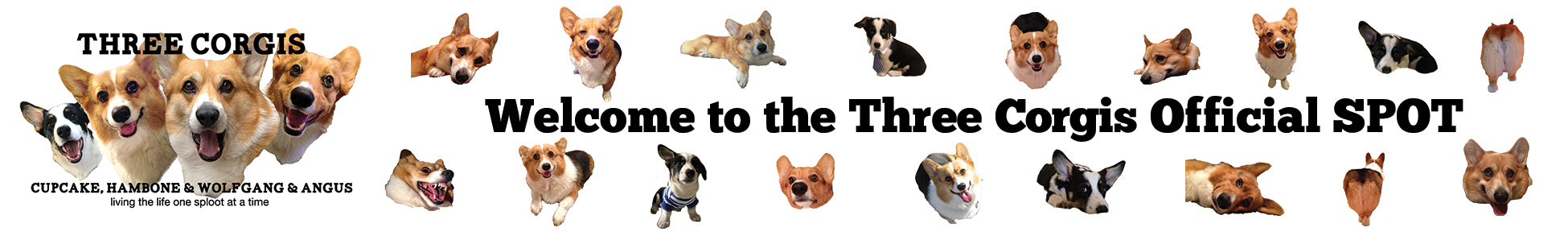 Three Corgis Official Blog